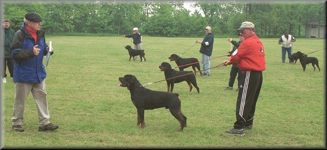 Jeneck's Punch, male rottweilers