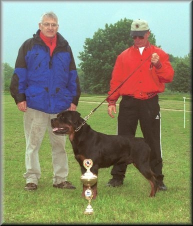 Jeneck's Punch, rottweiler males